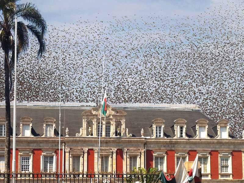 Les criquets envahissent le palais d'Ambotsirohitra