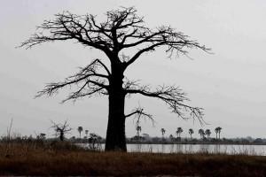 photo baobab